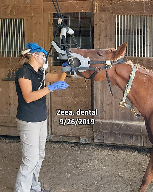 Name: zeea-dental-sept26-20190926_122150-copy.jpg, Views: 1180, Size: 298.58 KB