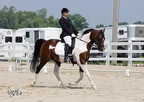 Name: dixie-sire-dressage.jpg, Views: 491, Size: 57.75 KB