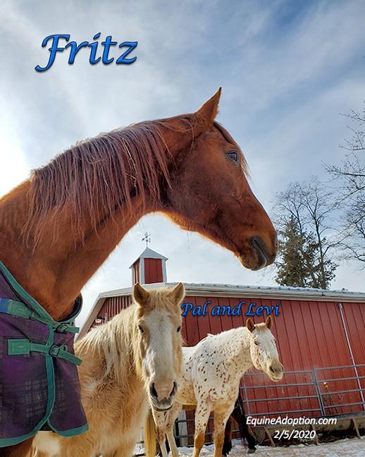 Name: fritz-pal-levi-feb5-20200205_113102-copy.jpg, Views: 504, Size: 106.09 KB