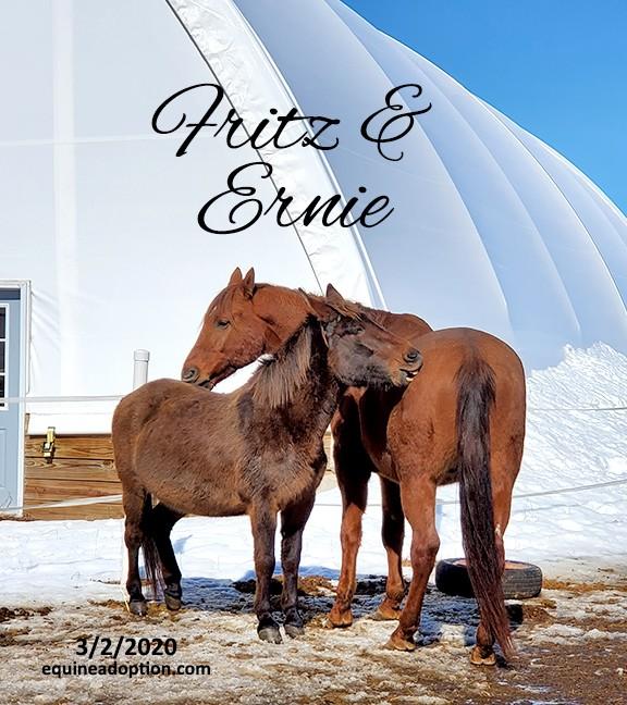 Name: fritz-ernie-groom-march2-20200302_113449-copy.jpg, Views: 362, Size: 119.83 KB