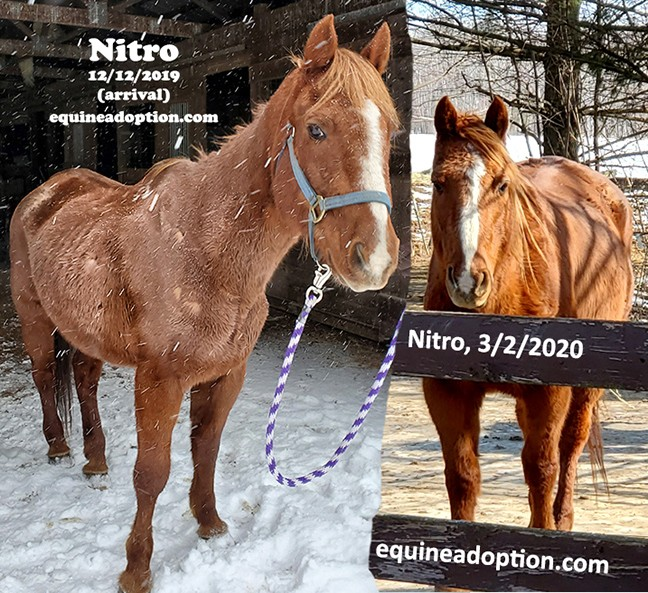 Name: nitro-front-before-after-dec-march.jpg, Views: 410, Size: 164.65 KB