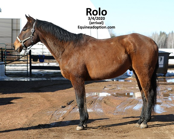 Name: rolo2-march4-IMGL0513-copy.jpg, Views: 394, Size: 86.97 KB