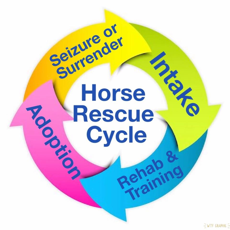 Name: horse rescue cycle.jpg, Views: 55, Size: 80.65 KB