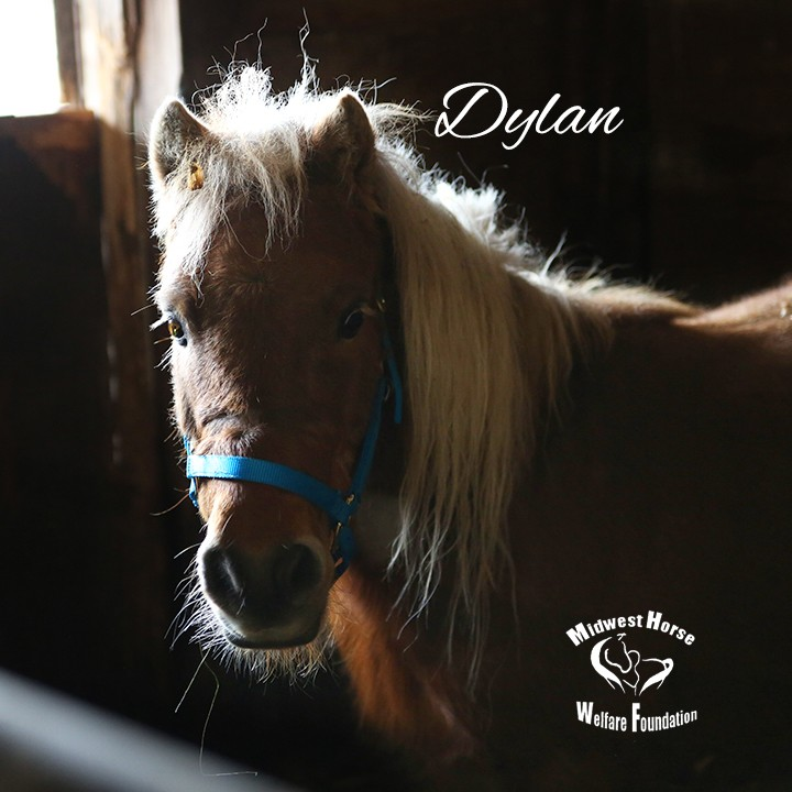 Name: dylan pony arrival march28 IMGL0699 copy.jpg, Views: 672, Size: 89.86 KB