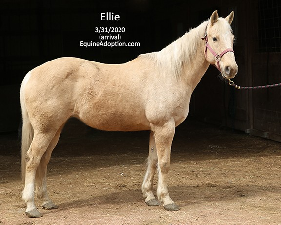 Name: ellie1-march31-IMGL0719-copy.jpg, Views: 550, Size: 73.73 KB