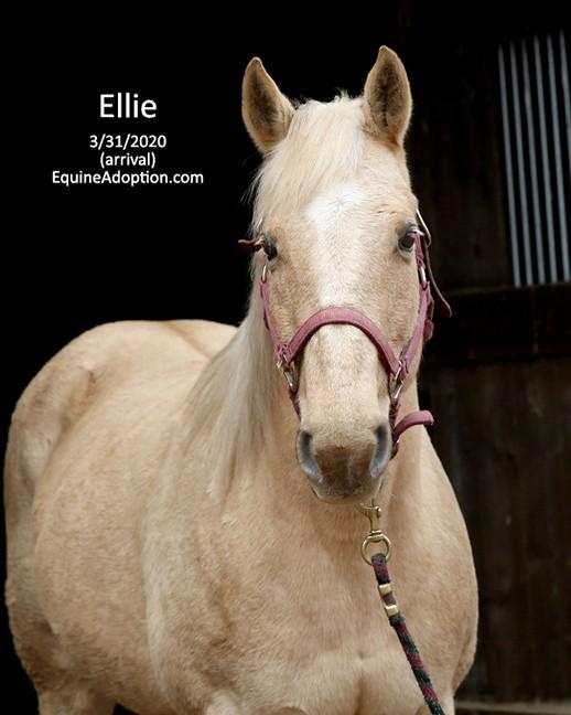 Name: ellie3-march31-IMGL0740-copy.jpg, Views: 561, Size: 65.68 KB