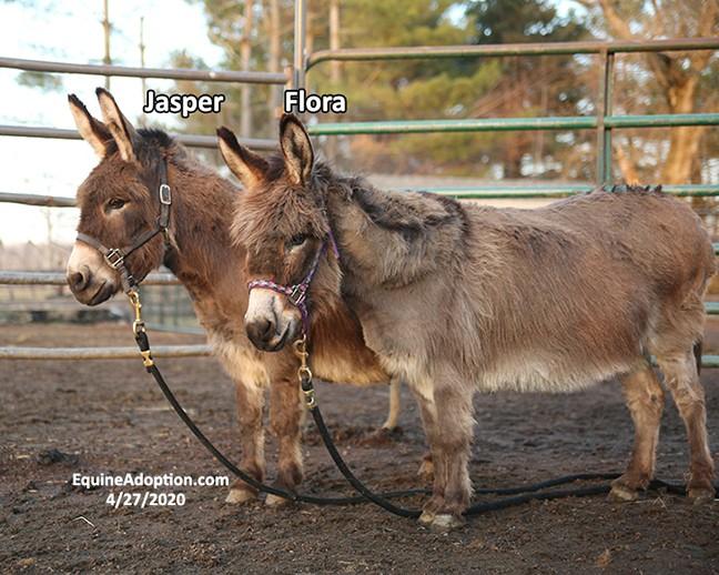 Name: jasper-flora-donkeys2-april27-IMGL1238-copy.jpg, Views: 253, Size: 114.71 KB
