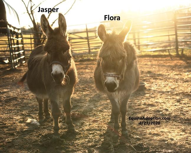 Name: jasper-flora-donkeys3-april27-IMGL1126-copy.jpg, Views: 261, Size: 115.12 KB
