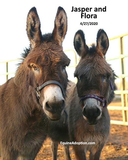 Name: jasper-flora-donkeys-april27-IMGL1111-copy.jpg, Views: 258, Size: 91.26 KB