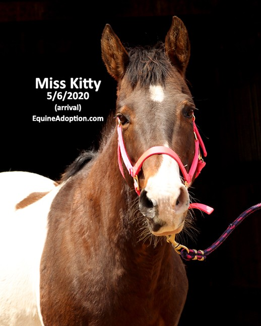 Name: MissKitty3-may6-IMGL1459-copy.jpg, Views: 317, Size: 67.43 KB