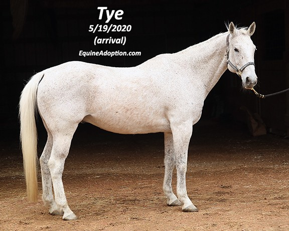 Name: tye1-may19-IMGL1765-copy.jpg, Views: 350, Size: 79.12 KB