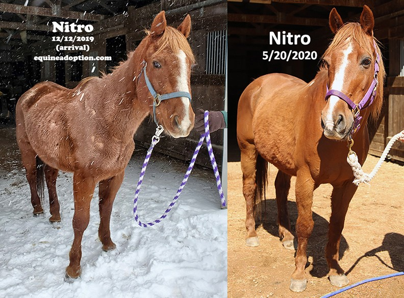 Name: NITRO-BEFORE-AND-AFTER-FRONT-MAY20.jpg, Views: 142, Size: 178.94 KB