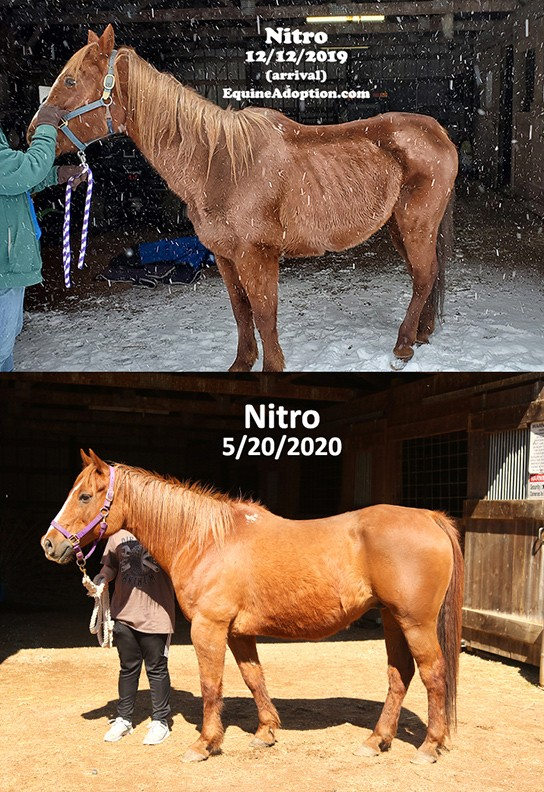 Name: NITRO-BEFORE-AND-AFTER-LEFT-SIDE-MAY20.jpg, Views: 143, Size: 172.04 KB