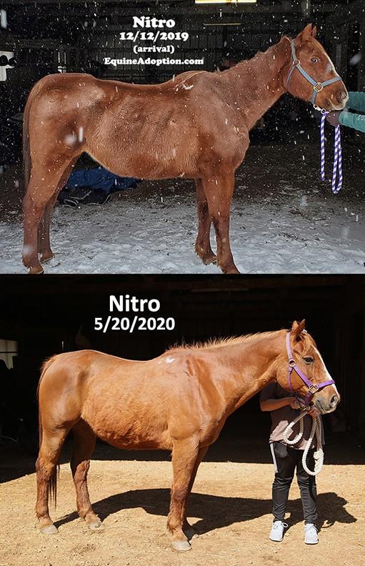 Name: NITRO-BEFORE-AND-AFTER-RIGHT-SIDE-MAY20.jpg, Views: 144, Size: 160.63 KB