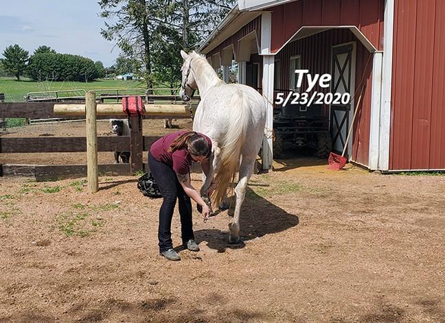 Name: tye-hoof-picked-may23-20200523_111402-copy.jpg, Views: 223, Size: 137.88 KB