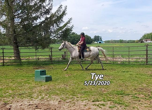 Name: tye-trot-may23-20200523_114651-copy.jpg, Views: 217, Size: 131.99 KB