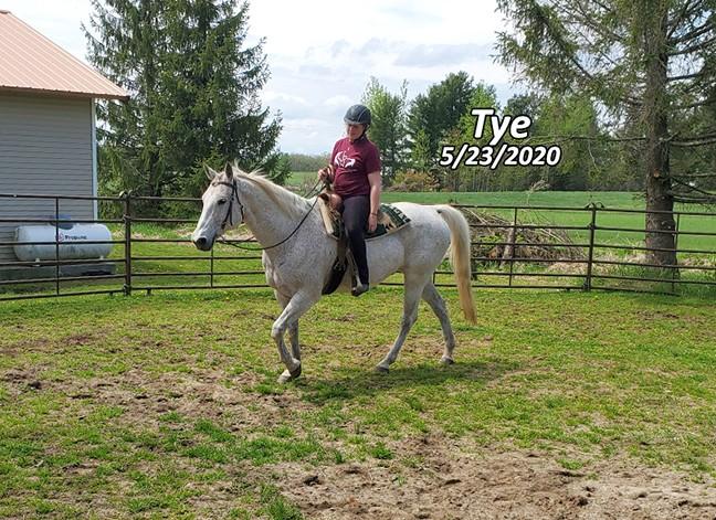 Name: tye-walk-loose-rein-may23-20200523_114756-copy.jpg, Views: 216, Size: 151.74 KB