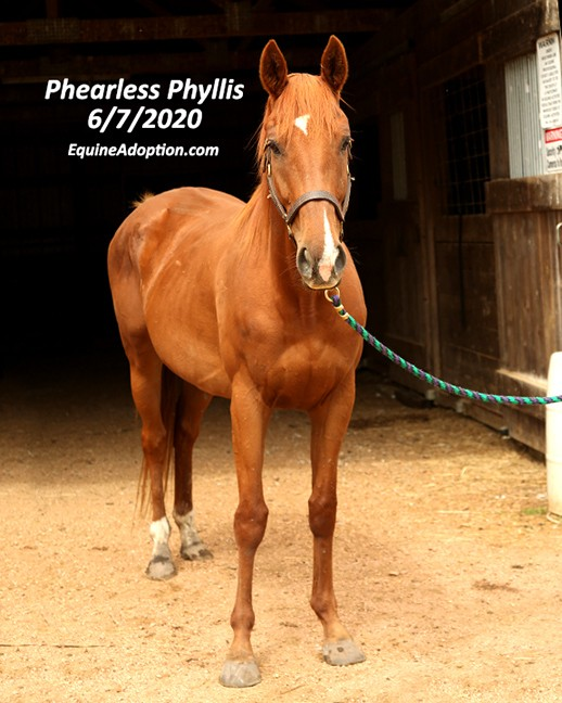 Name: phearless-phyllis3-june7-IMGL2610-copy.jpg, Views: 177, Size: 86.54 KB