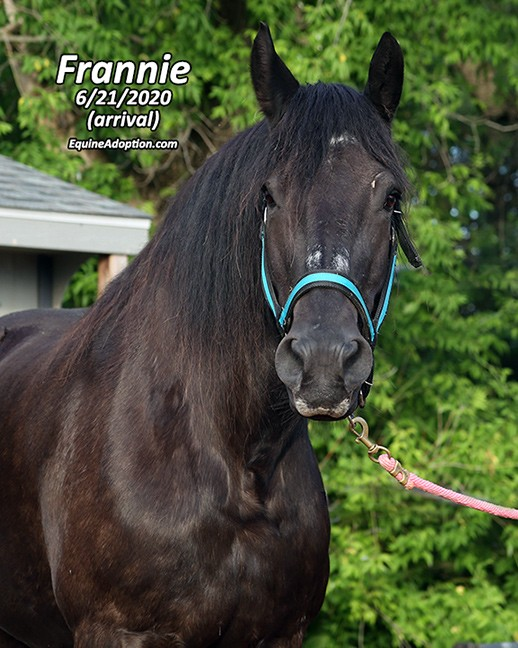 Name: frannie3-june21-IMGL2754-copy.jpg, Views: 92, Size: 103.51 KB