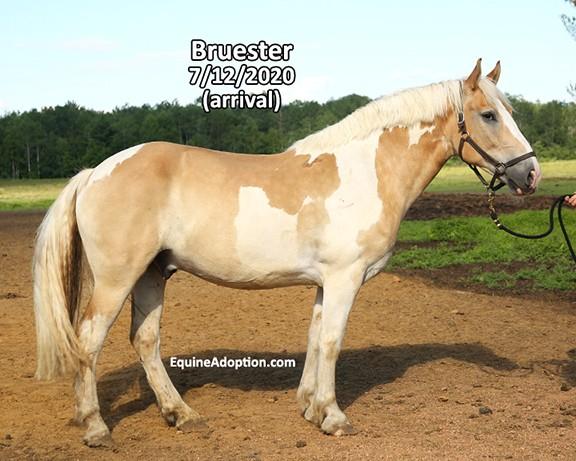 Name: bruester1-july12-IMGL3865-copy.jpg, Views: 126, Size: 82.23 KB