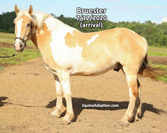 Name: bruester2-july12-IMGL3856-copy.jpg, Views: 124, Size: 86.04 KB