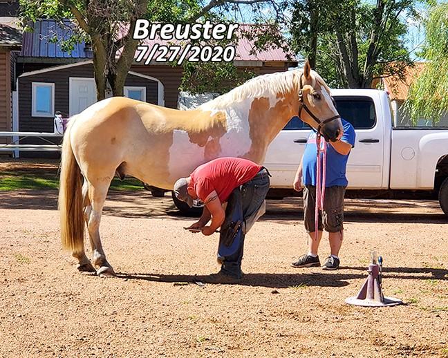 Name: breuster-trim1-july27-20200727_103959-copy.jpg, Views: 85, Size: 175.62 KB