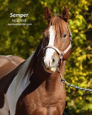 Name: semper3-oct4.jpg, Views: 29, Size: 37.56 KB