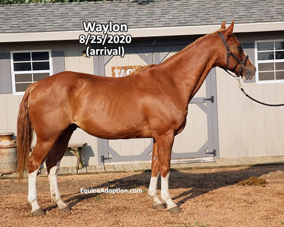 Name: waylon1-aug25-IMGL6021-copy.jpg, Views: 50, Size: 96.18 KB