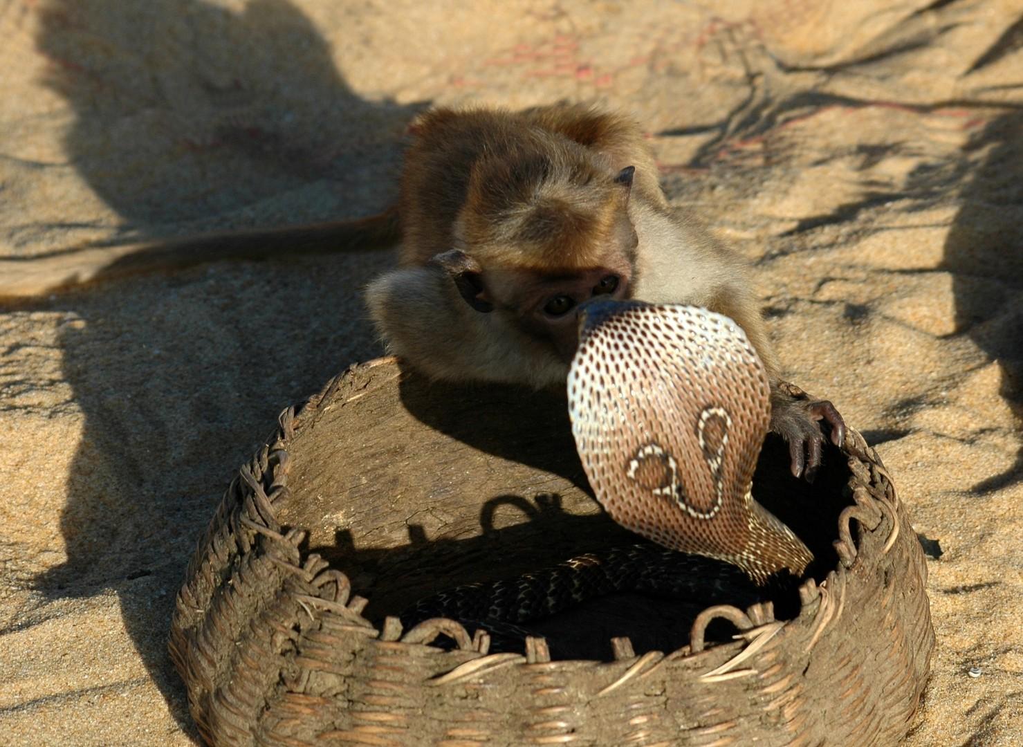 monkey-1245007_1920.jpg