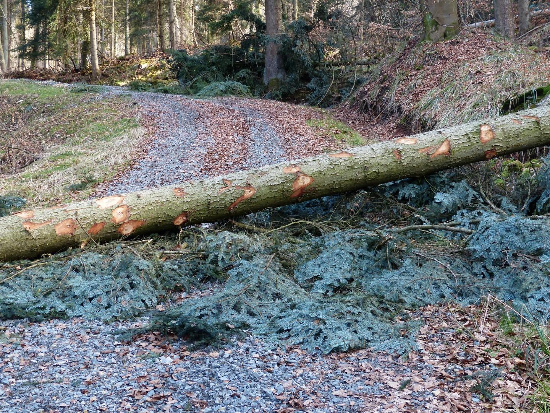 forest-work-100747_1920.jpg