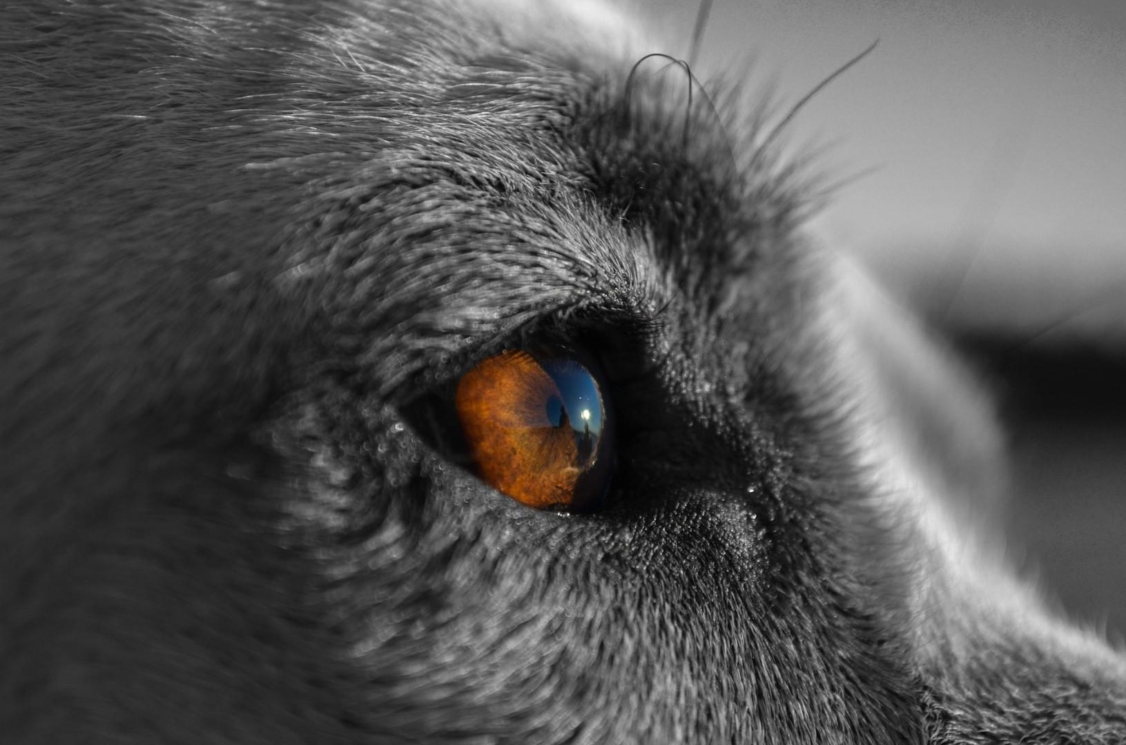 canine-863032_1920.jpg