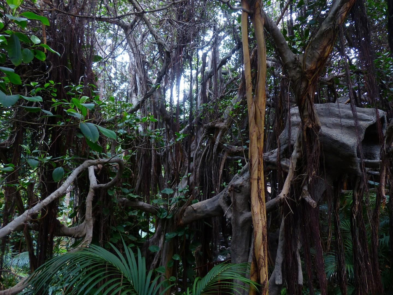 jungle-406780_1920.jpg