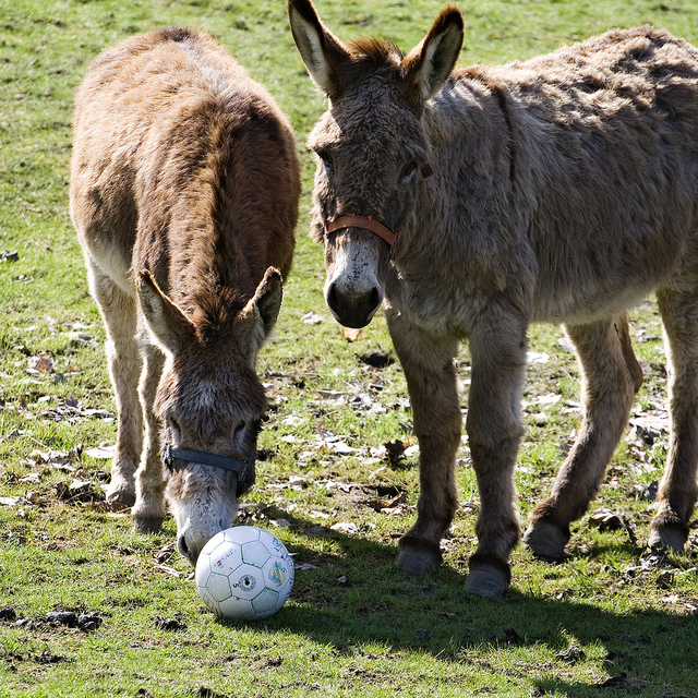 rondon the donkey.jpg