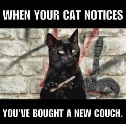 when-your-cat-notices-youve-bought-a-new-couch-9435449.png