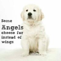 angel dog 3 (200x200).jpg