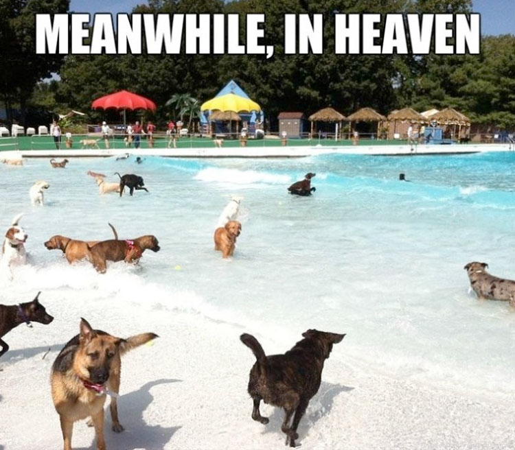 dogs-playing-in-heaven.jpg