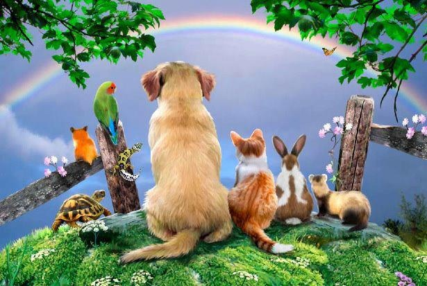 all in wonder at rainbow bridge.jpg
