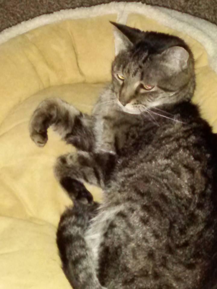 Abby In Bed.jpg