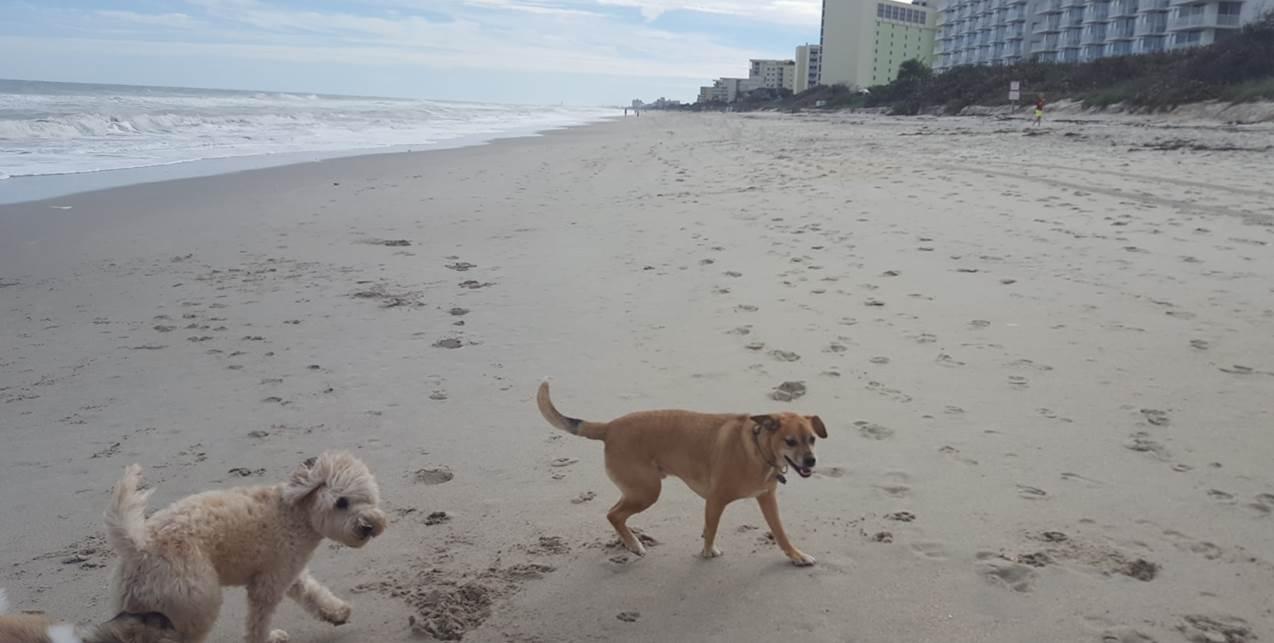 beachdogs.jpg