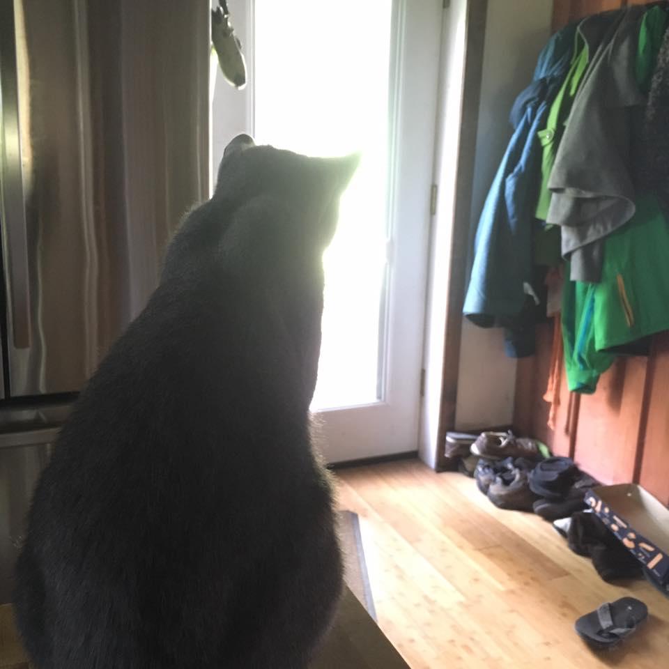 kittyloss01.jpg