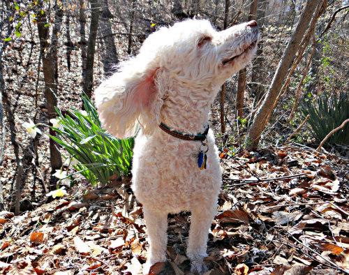 1052 Andy enjoying the breeze.jpg
