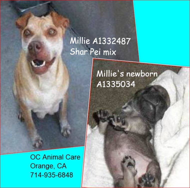 Millie's shelter pic with baby 7-2014.jpg