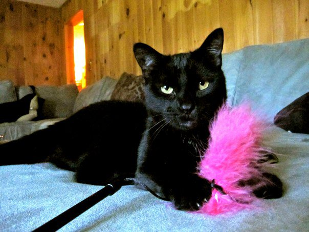 Katie Purry Feather toy.jpg