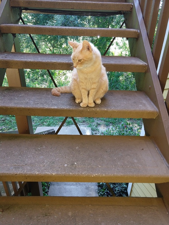 Talyn-on-stairs-lotuslanding-resized.jpg