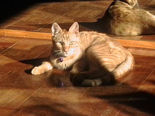 New Kitty (2006-12-27) 062 studio sun+.jpg
