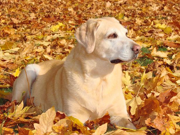 autumn maddie 1.jpg