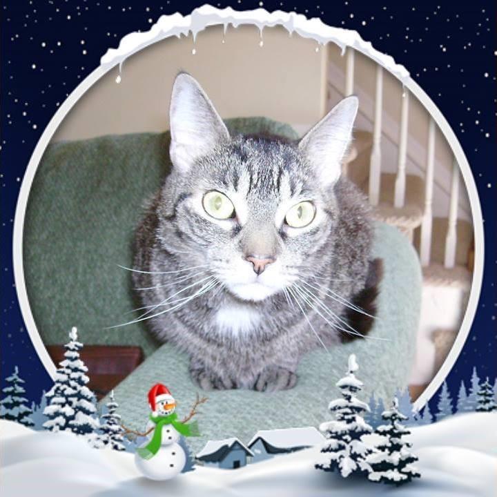 jingles christmas.jpg