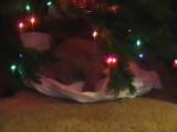 Rocky under Tree 2007-12-SMALL.jpg