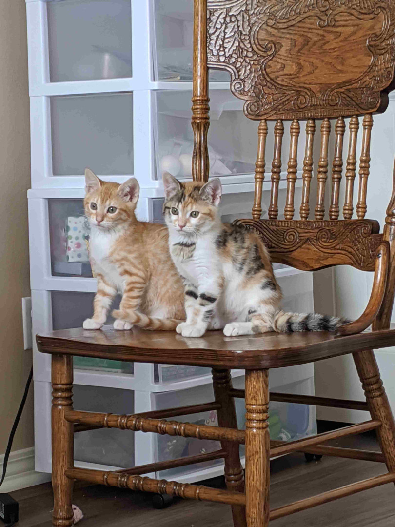 chair kitties.jpg