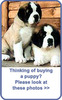 Click image for larger version - Name: Cover_Pups_Blue_new.jpg, Views: 24, Size: 16.34 KB
